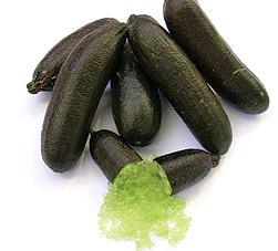 Plant de Microcitrus Australasica, Citron caviar, Citron doigt, Finger lime