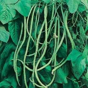 amarante Utilis/é dans West Indian /& Cuisines asiatiques 500 graines CALLALOO jama/ïcaine,