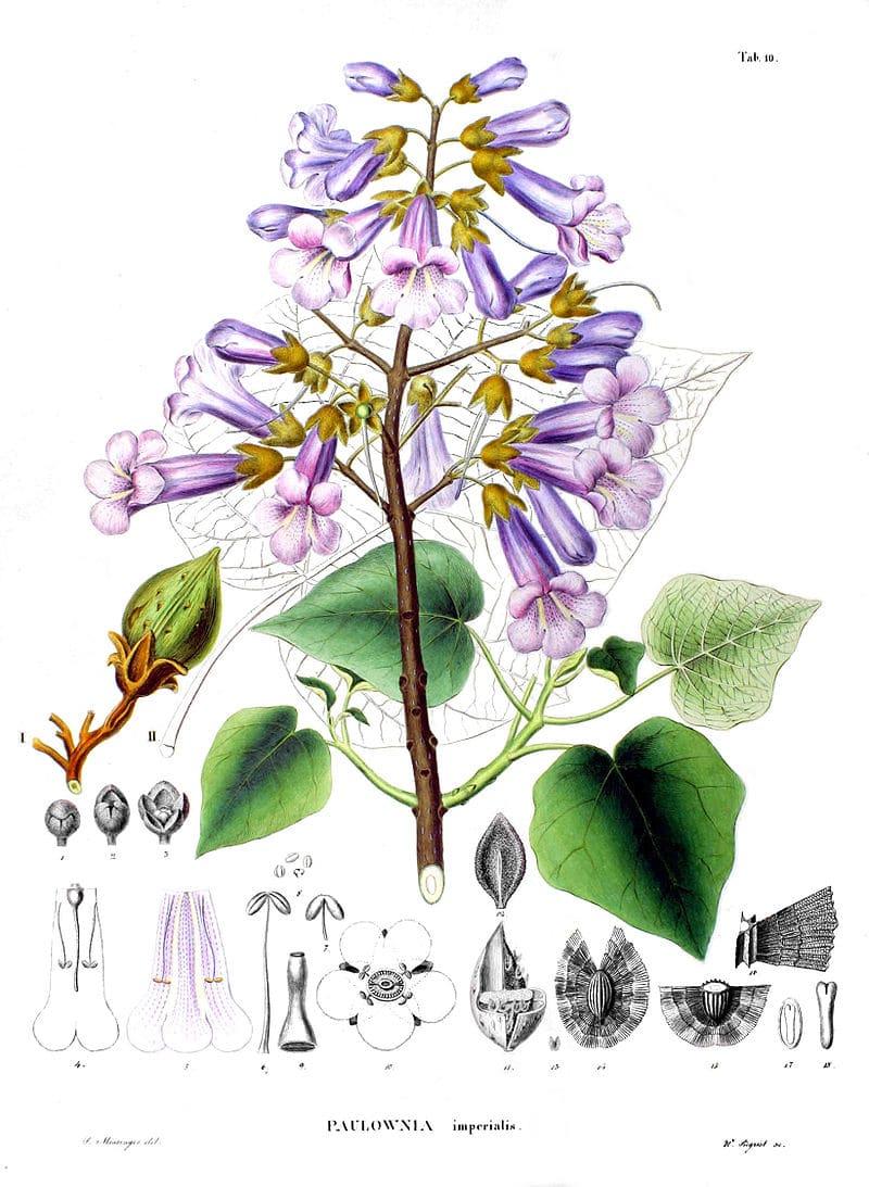 Famille botanique