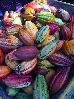 Utilisations du cacaoyer, cabosses de cacao