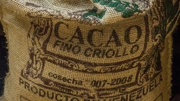 Cacao de la variété Criollo