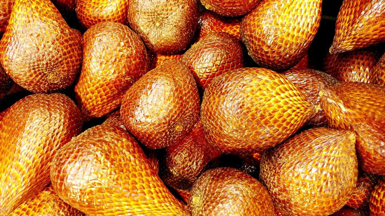 1 Graines de Snake Fruit-Salacca zalacca-Salak 5 graines de tournesol